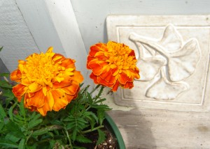 Marigolds and gingko leaf tile