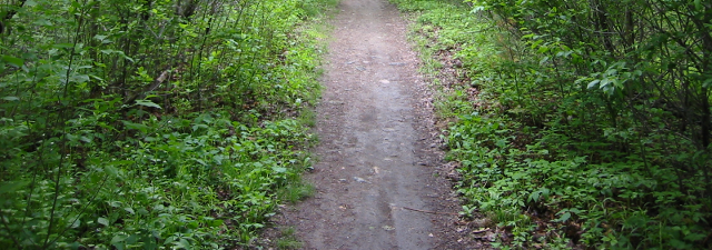 Bicycle path, bottom half of photo. By Darxus via Wikimedia Commons